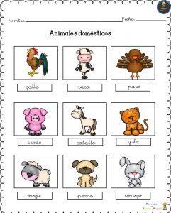 Conociendo-a-los-animales