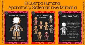El-Cuerpo-Humano