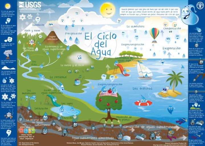 Ciclo biológico de las ranas para niños